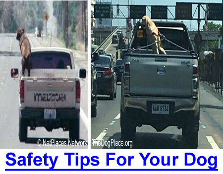 SIMPLE SAFETY TIPS FOR YOUR DOG: Puppies, like children, need safe surroundings and monitoring.