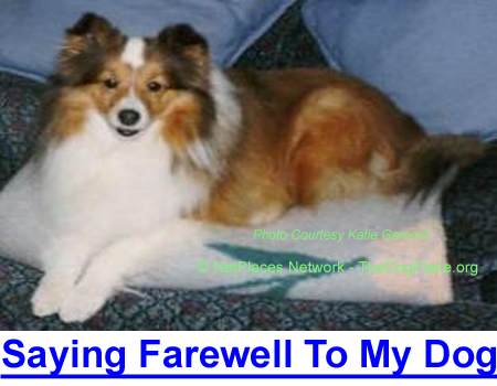 SAYING FAREWLL TO MY DOG: My best friend's eyes say she is only afraid of living, it is time to let my old dog go…