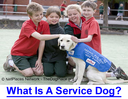 SERVICE DOG DEFINED: AKC Judge explains why dogs wearing a service dog harness should be welcomed everywhere.