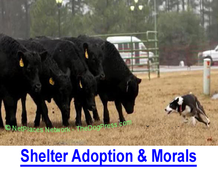 SHELTER ADOPTION = MORAL SUPERIORITY: Why do people risk adopting shelter dogs vs. buying a predictable purebred?