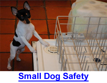 SMALL DOG SAFETY PRECAUTIONS: Make your home safe for small dogs and puppies, they can't protect themselves.