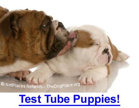 TEST TUBE PUPPIES MAKE HISTORY: In-vitro fertilization makes dog breeders wonder what's next?