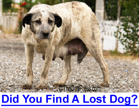 WHAT TO DO IF YOU FIND A LOST DOG: Do you stop, do you ignore her? Is it safe to rescue a stray?