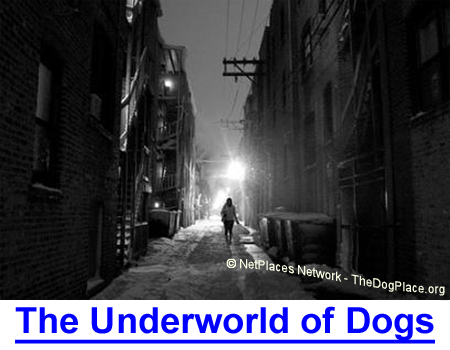 THE UNDERWORLD OF DOGS: Physiologist takes you to the shadow world of pit bulls created by the underbelly of society.