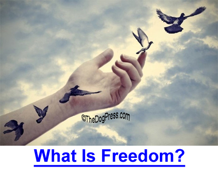 WHAT IS FREEDOM? Have the rights of dog owners advanced in America?