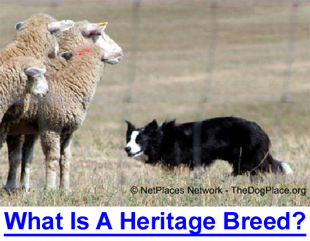 WHAT IS A HERITAGE BREED? Breeds still performing the job for which they were bred!