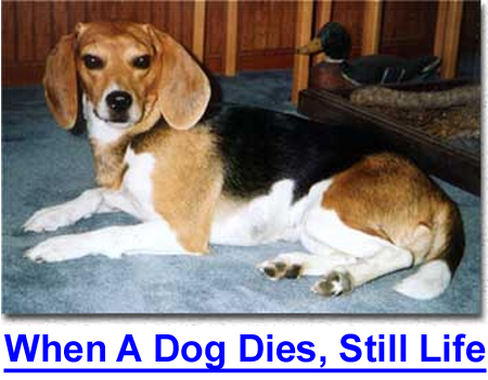 WHEN A DOG DIES, STILL LIFE: Preserving a pet through taxidermy can work you through your grief.