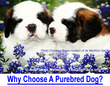 WHY CHOOSE A PUREBRED DOG? Your choice of a canine best friend is an important life decision.