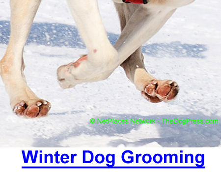 WINTER DOG GROOMING: Professional groomer on itchy dry-heat skin and icy foot care.
