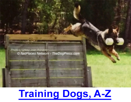 TRAINING DOGS, AGILITY TO SCHUTZHUND: Agility was just a starting point for this 11 year old German Shepherd Dog shown flying over walls and hurdles as required for Schutzhund title.