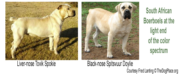 Canine Coat Color Genetics Part 3 Thedogplaceorg