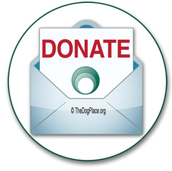 did you ever get mail from the humane society donation solicitations christmas cards free address labels was it from the humane society of the united - Humane Society Christmas Cards