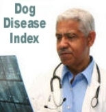 Your veterinarian knows all about disease in the canine