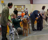 Handlers Exhibiting At Dog Show