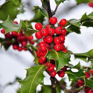 Traditional Christmas Decorations Like Live Plants Can Be Deadly To Pets