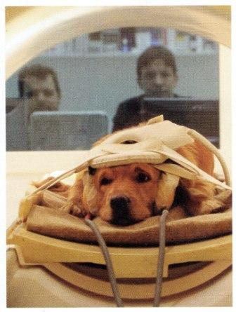 Dog Brain Studies
