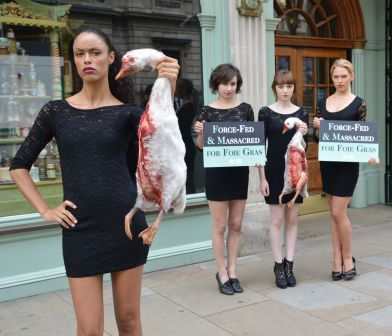 More PETA protests using bloody dead animals