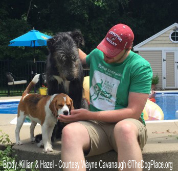 Son, Brody Cavanaugh and a young beagle bitch and her unlikely sidekick, an 8-month old Irish Wolfhound pup.
