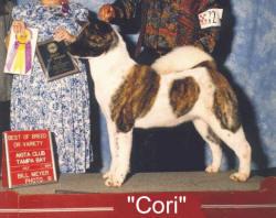 Akitas CAS, Cindy Smith, Top Akita breeder, Quality Akita puppies, Akita breeding program, Akita Breeders, Akita puppy, Akita litter