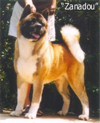 Ch. Zanadou - | Akitas CAS, Cindy Smith, Top Akita breeder, Quality Akita puppies, Akita breeding program, Akita Breeders, Akita puppy, Akita litter