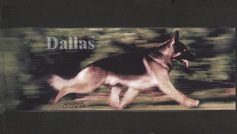 CERTIFIED GERMAN SHEPHARD DOG   TheDogPlace org