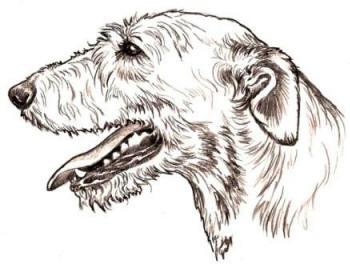 Irish Wolfhound Artwork by Sue McClure