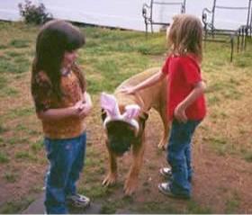 Mastiffs are gentle and love children