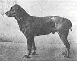 History Of The Rottweiler By Jan Cooper