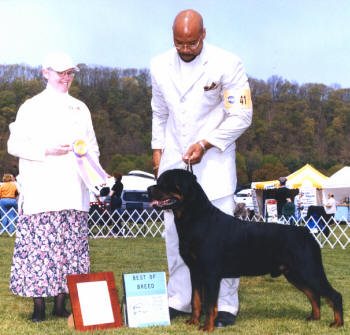 Tail Docking And Rottweiler History By Dorothy Wade Akc Judge