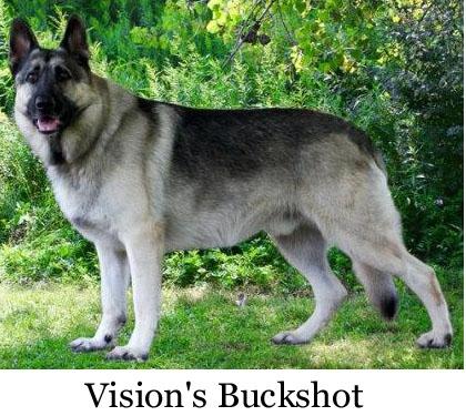 Australian Shepherd : Dog Breed Selector : Animal Planet