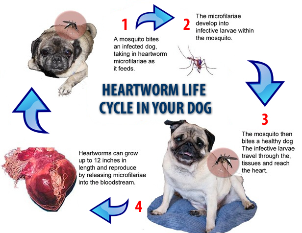 Proheart Lawsuit  Heartworm Prevention Recall History. Zoo Signs. Kappa Kappa Gamma Signs Of Stroke. Lumg Signs. Theautismhelper Signs. Business Park Signs. Fish Restaurant Signs Of Stroke. Treat Signs. Flea Market Signs